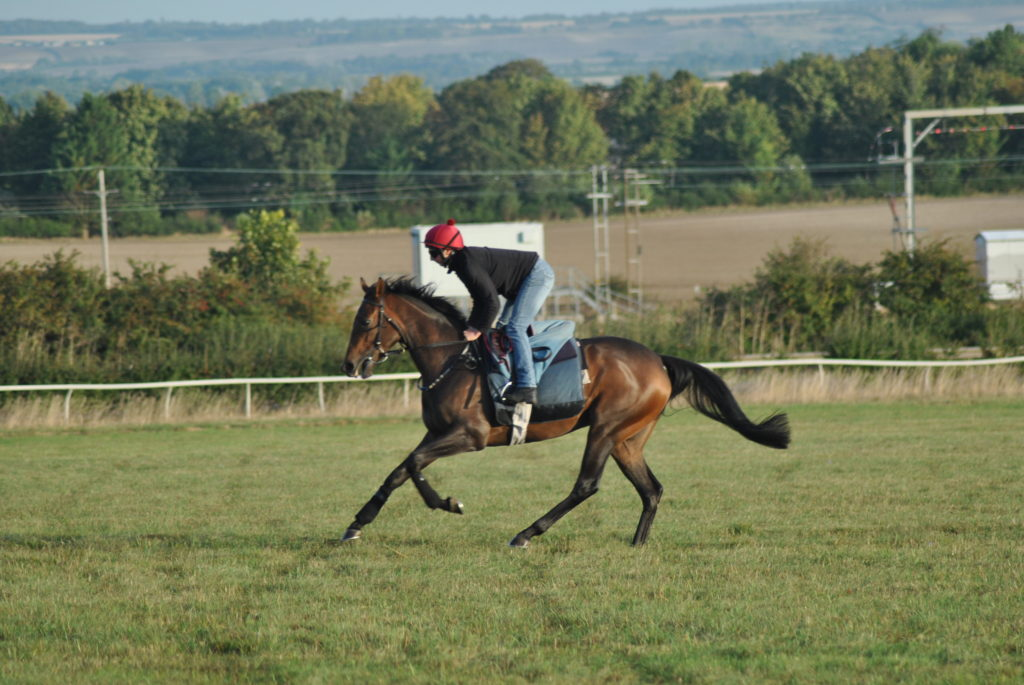 grass gallops therfield heath racehorse