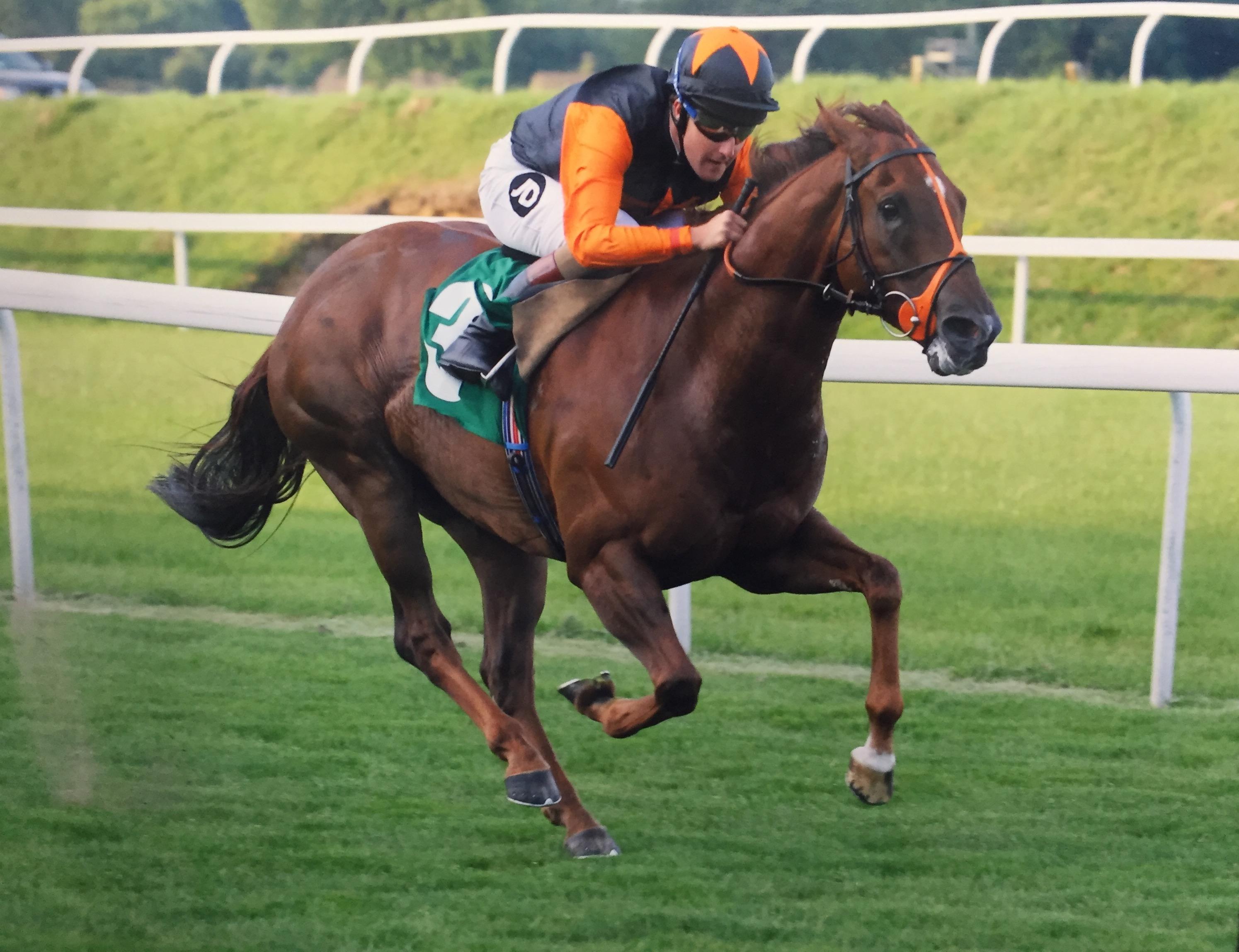 racehorse john jenkins racing