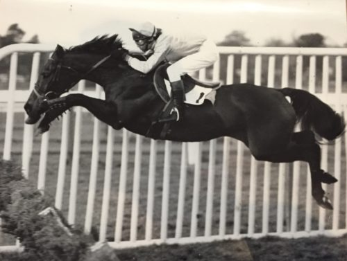 horse hurdler hurdles racehorse jump racing black and white jumping