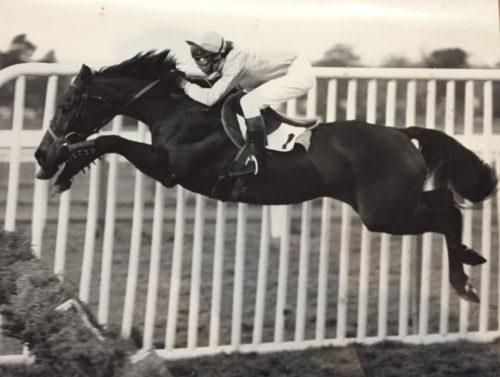 horse hurdler hurdles racehorse jump racing black and white jumping