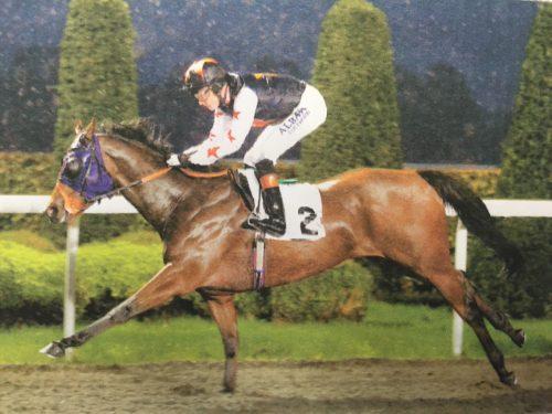bubbly bailey racehorse kempton park rain horse gallop