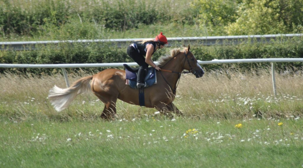 racehorse training on gallops