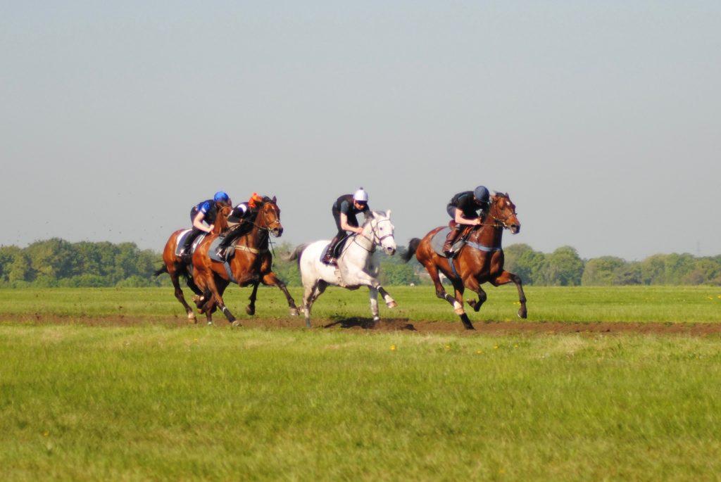Newmarket Gallops Cambridge Road National Hunt Horses racehorses